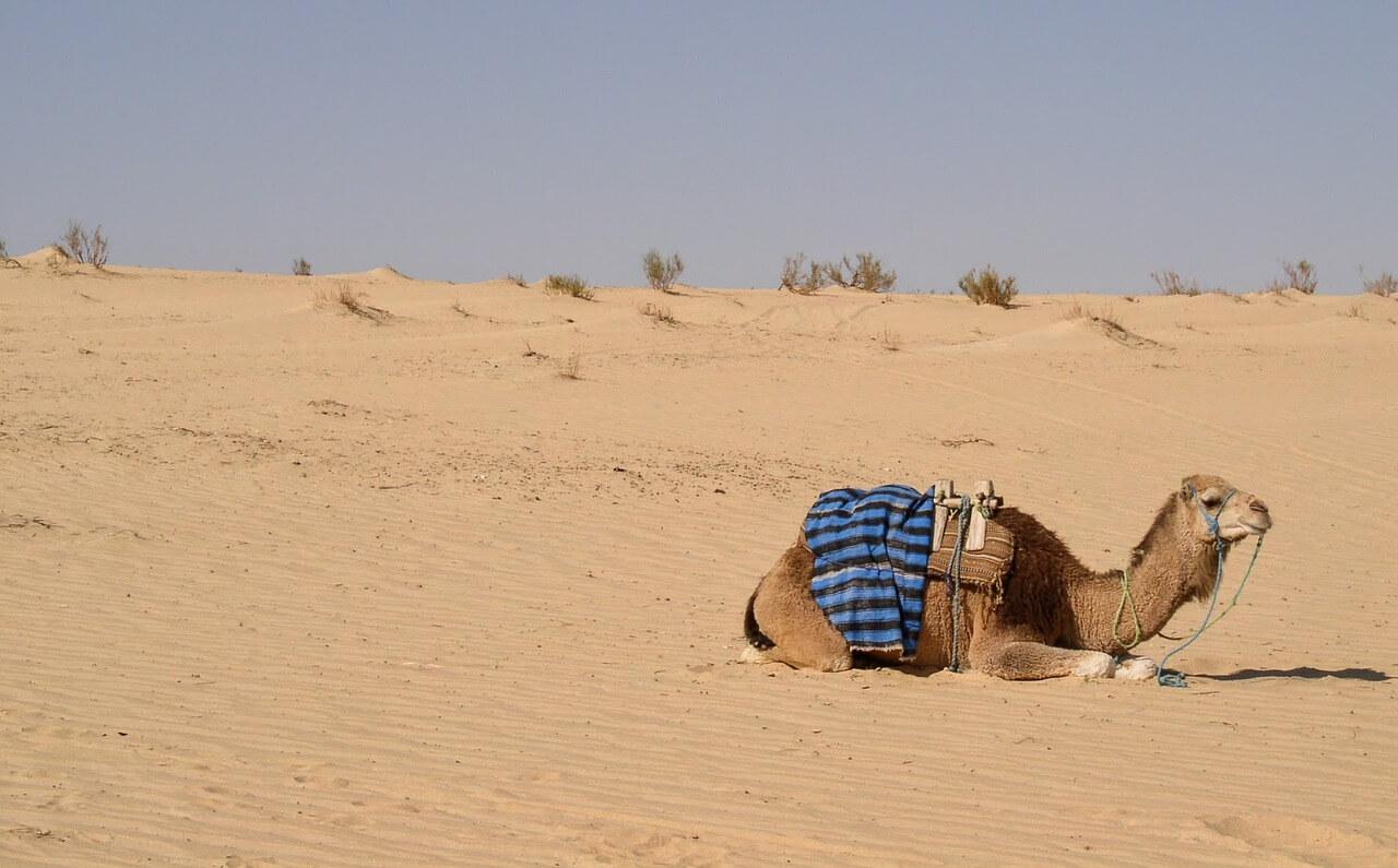 Nocleg w słonecznej Tunezji – kamping czy wakacje all inclusive?